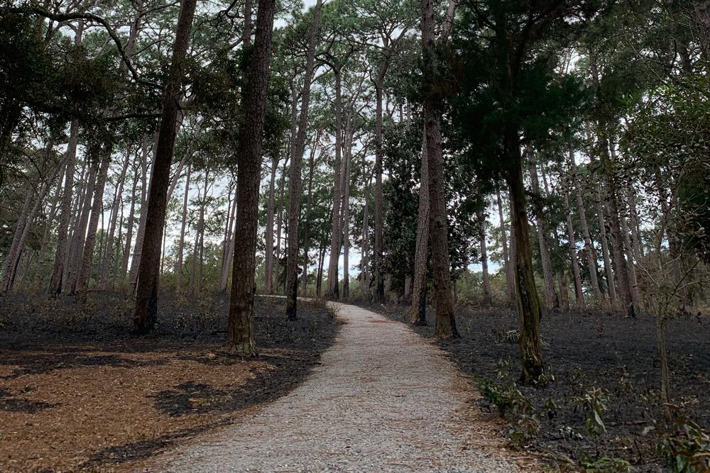 knoll park controlled burn