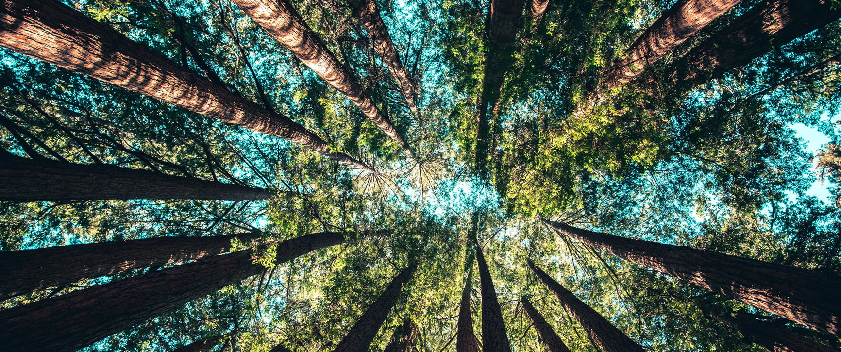 Tall Wood Buildings, LEED, and Wood as a Green Building Material…